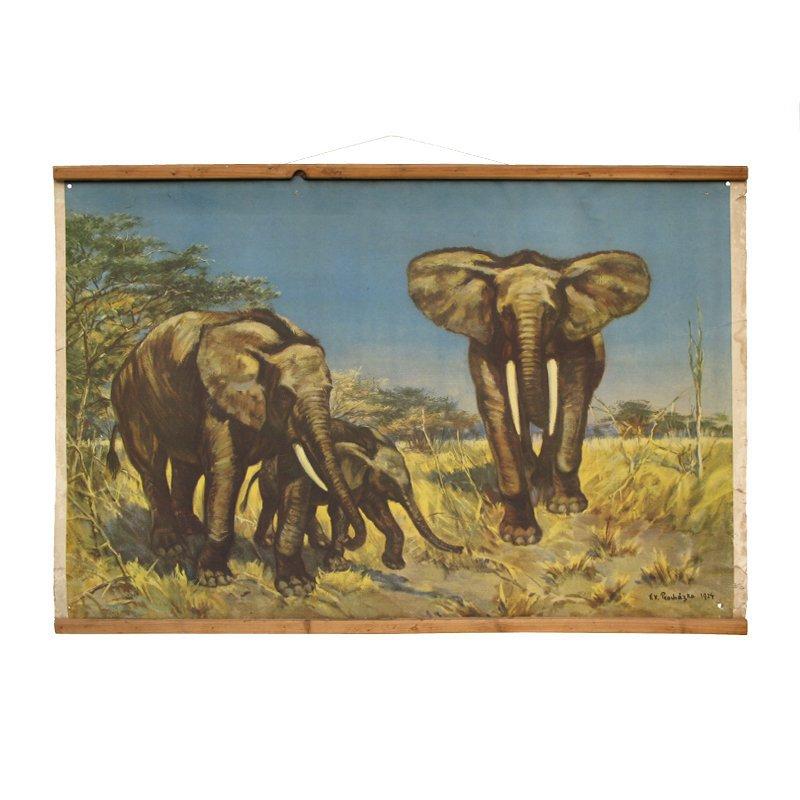 Školní plakát sloni